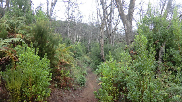 La Gomera (Spain's Canary Islands) - Parque Nacional de Garajonay: on a trail in the Laurel rain forest