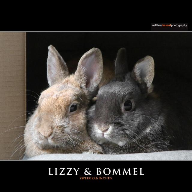 LIZZY & BOMMEL