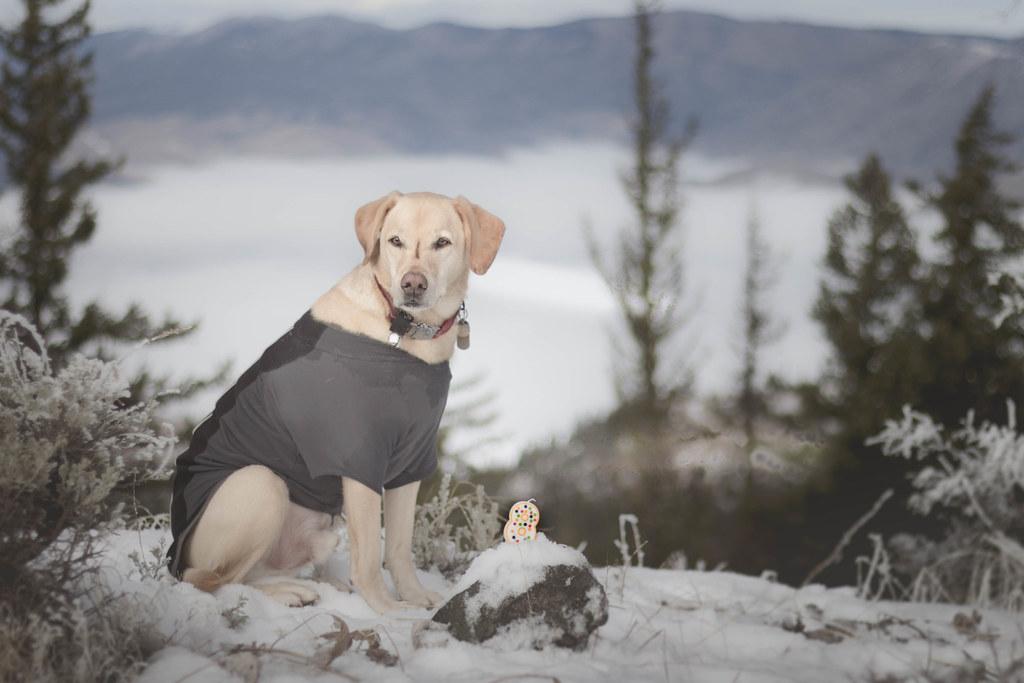 Summit dogs on Horse Lake Mountain