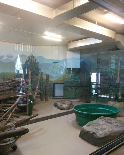 Winter residence (2) #toronto #torontozoo #pandas #giantpandaexperience #latergram