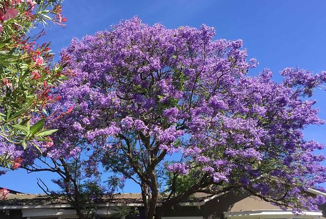 Summer---East-Ivanhoe---Victoria-Australia