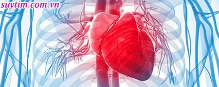Trái tim là bộ phận quan trọng nhất của cơ thể