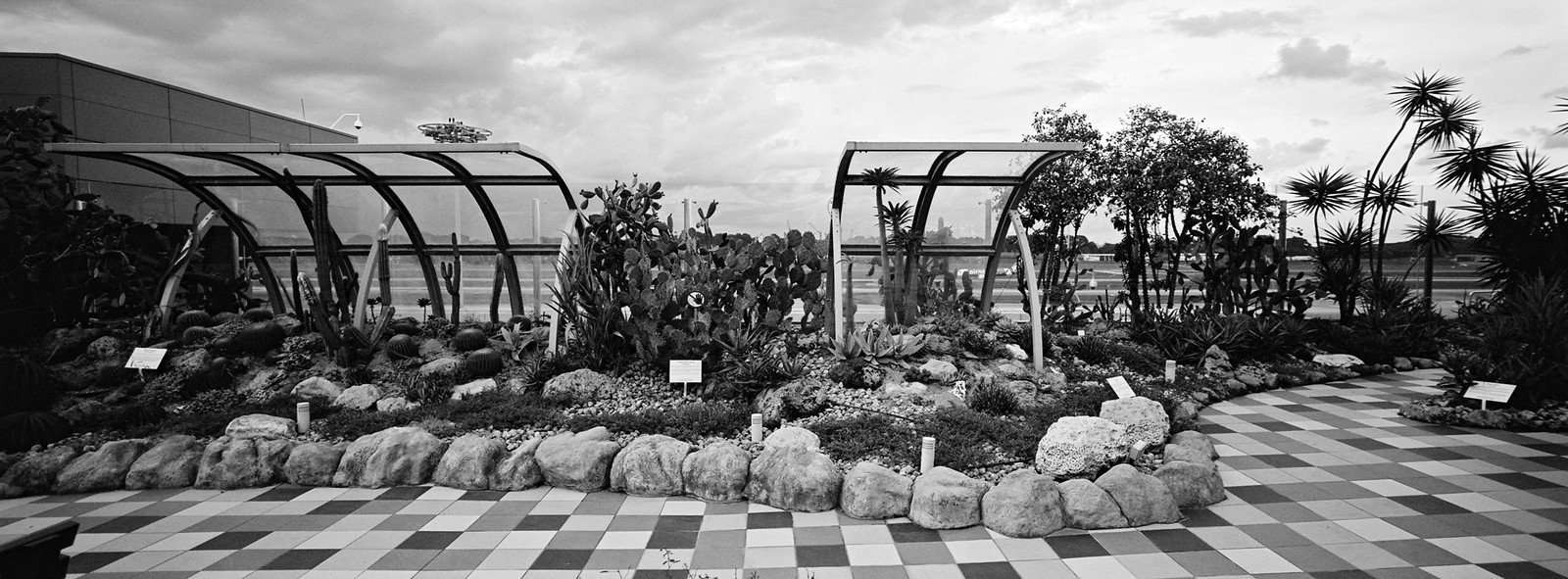 Changi Airport Cactus Garden ii