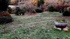 Giardino d'autunno