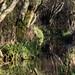 Leighton Moss RSPB D210bob DSC_8767
