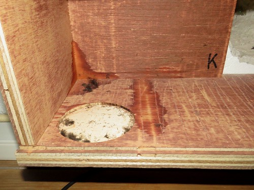 Gierzwaluw-veertjes in observatiekast K