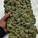 Marijuanasupplier by Marijuanasupplier