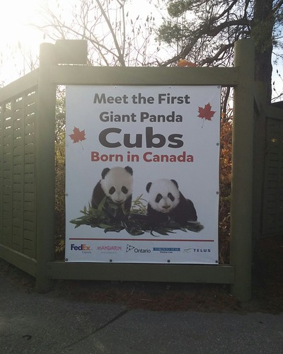 Going to see the pandas of the Toronto Zoo #toronto #torontozoo #pandas #sign #latergram