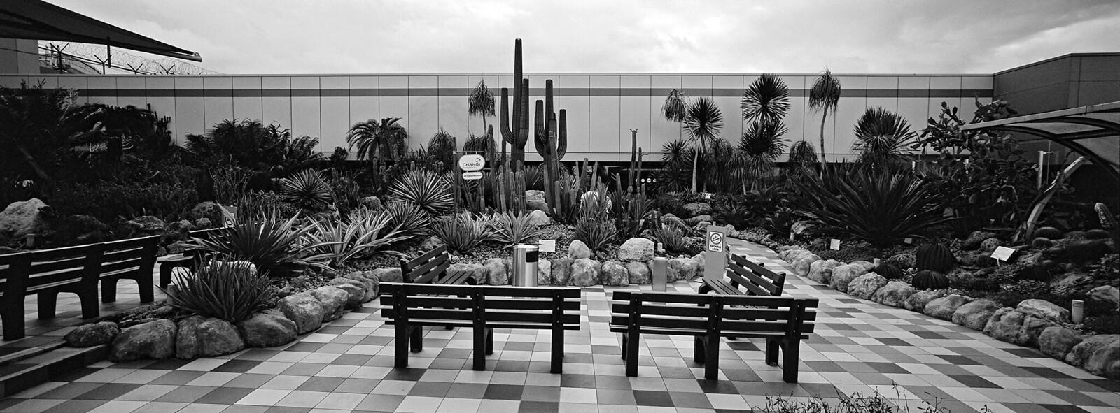 Changi Airport Cactus Garden i