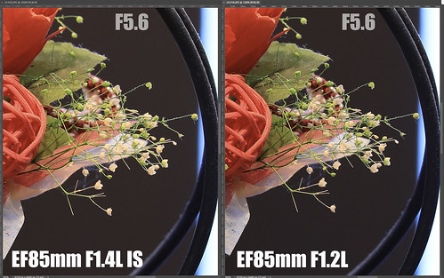 EF85mm F1.4L IS vs EF85mm F1.2L_16