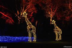 WildLights - Woodland Park Zoo