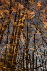 Autumn Memory