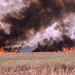 Small photo of Fire sweeps the river of grass. North Everglades