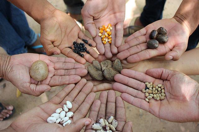 El Proyecto de Ley 827/2015 propone el pago de regalías sobre especies de plantas que sufrieron alteraciones, como las híbridas - Créditos: Lilian Campelo
