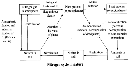 ncert-solutions-for-class-8-science-microorganisms-friend-and-foe-8