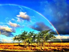 #maui :rainbow: #rainbow