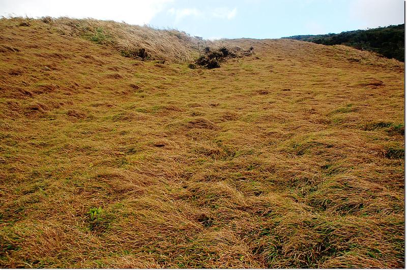 溪仔口山山坡大草原 1