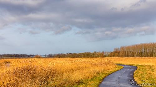 Bike path through the reeds