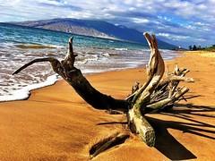Driftwood #maui