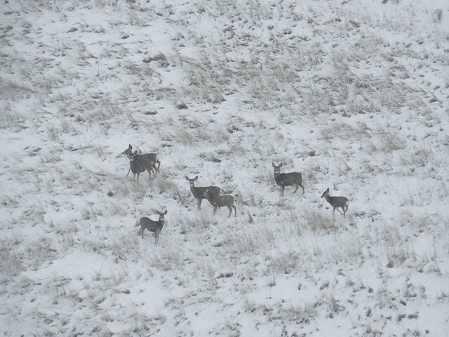 A Herd of Posers, Nikon COOLPIX S6800