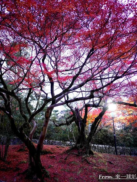 八阪神社47