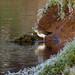Green Sandpiper, Rickerby Park, 11 December 17