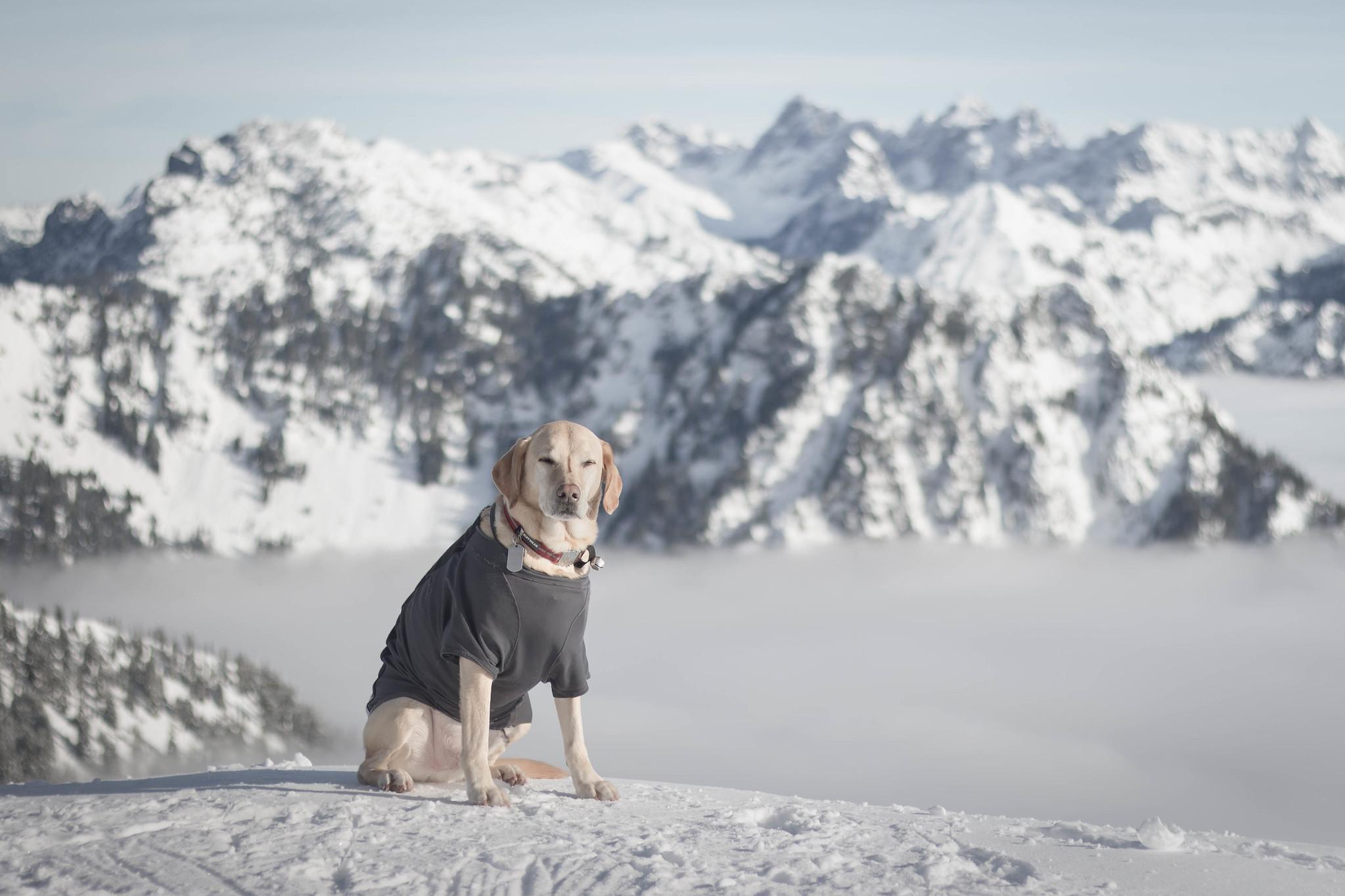Summit dogs on Granite Mountain