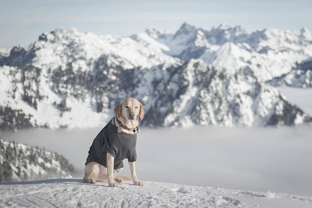 Summit dogs on Granite Mountain