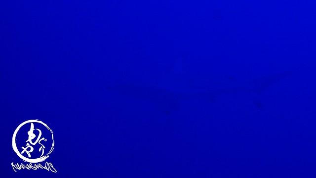 メジロザメがウロウロ~