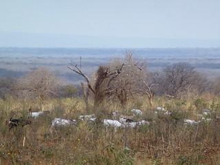The OLENGAPA shared grazing area, Kiteto, Tanzania