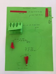 Pohutukawa craft instructions