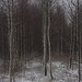 winter is escape V by Mindaugas Buivydas