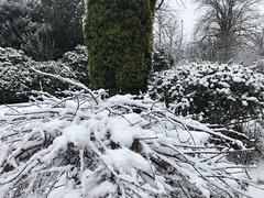 Croftfoot, my snowy garden
