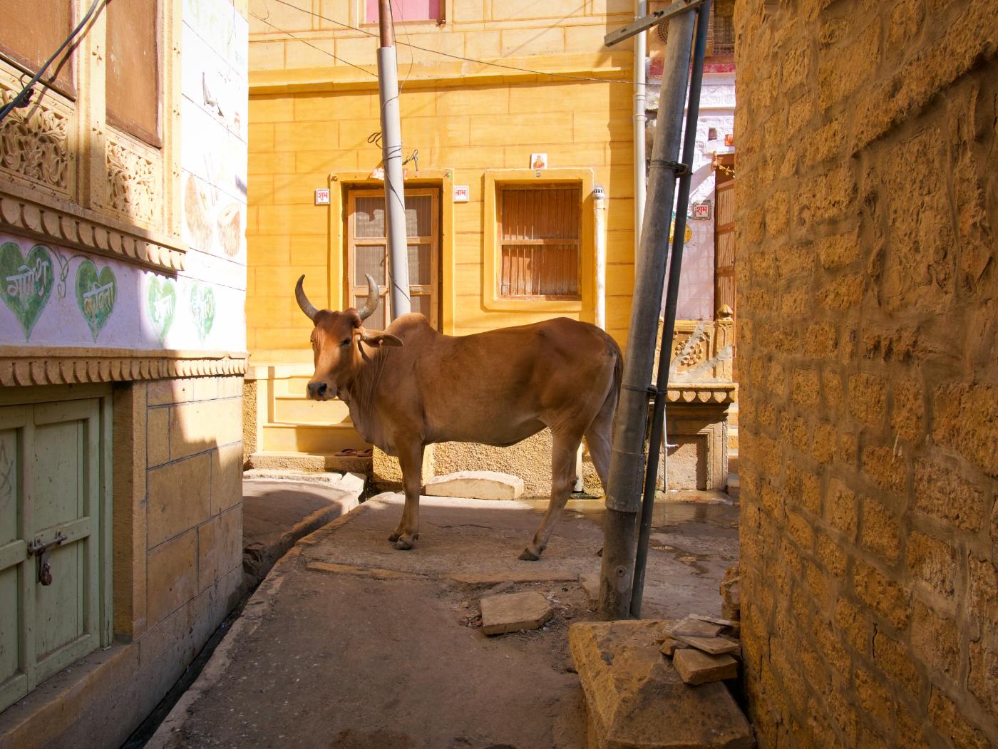 567-India-Jaisalmer