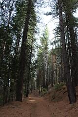 Merced Grove Trail