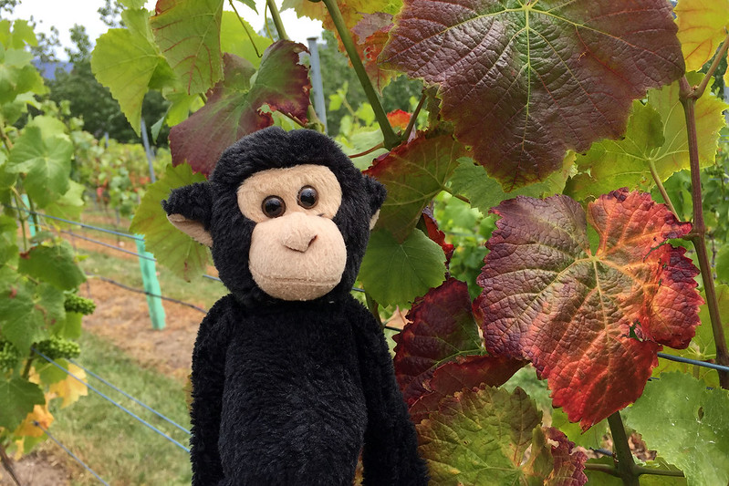 Monkey and vines