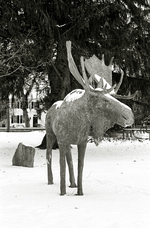 Cement Moose