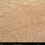 Mangifera indica wood