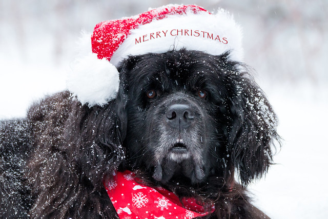 Merry Christmas from Santa Paws