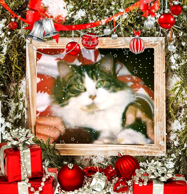 Sweet Mitzi In My Lap Framed With Decorations And Presents