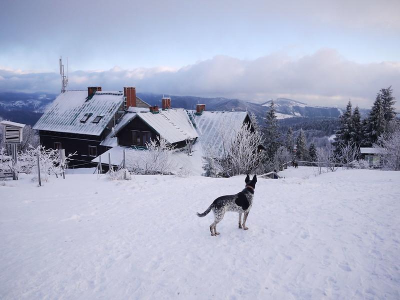 Wielka Racza z psem
