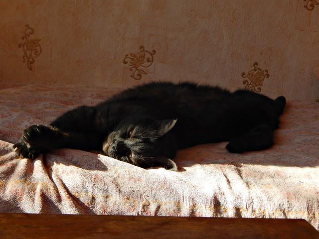 чёрный кот Муся | Musia the black cat