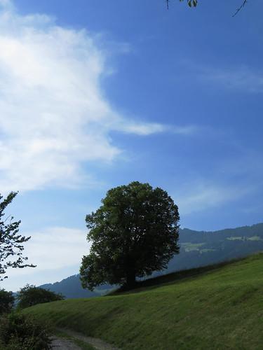 20170614 04 397 Jakobus Wolke Hügel Weg Wald Wiese