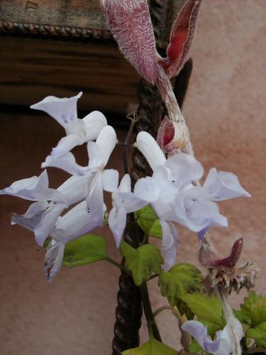 dernières fleurettes de l'année 25113818838_5d75cf287f