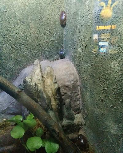 Frog #toronto #torontozoo #frog #amphibians #latergram