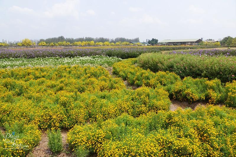 chok chai flower garden