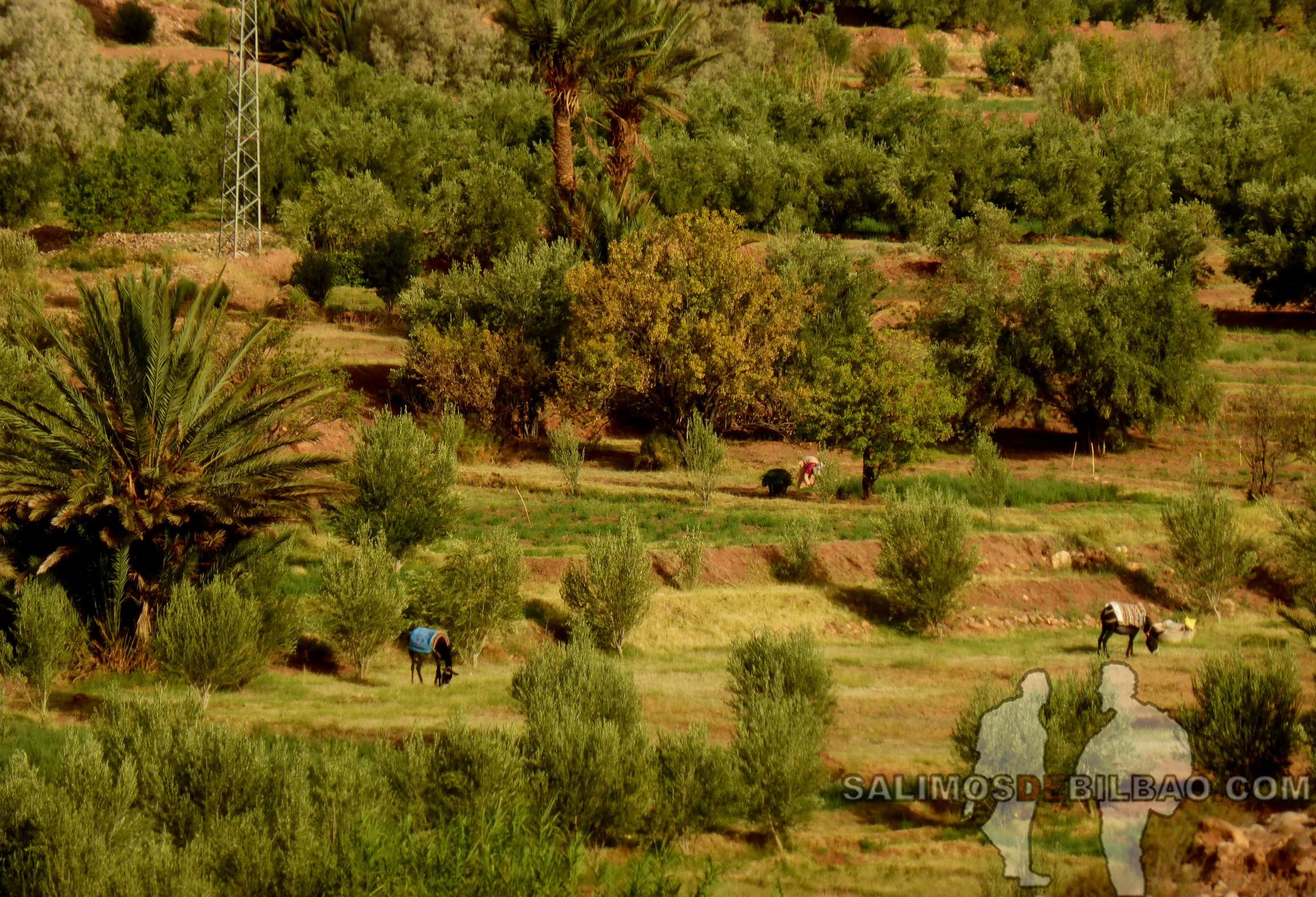 632. Rodeando el Kasbah Ait Ben Haddou