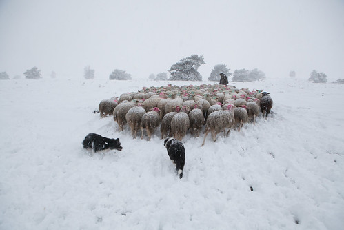 sneeuwzondag-16