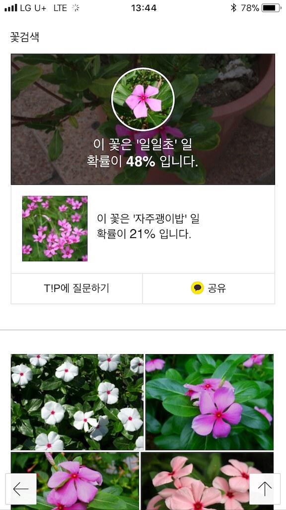koreanapps-flowersearch11