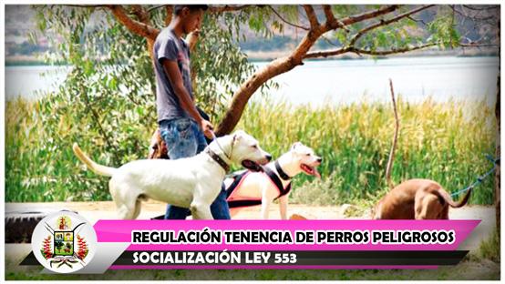 socializacion-ley-553-regulacion-tenencia-de-perros-peligrosos